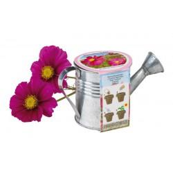Donica z kwiatami, COSMOS,...